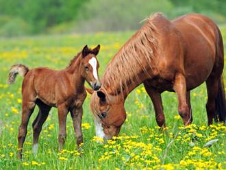 Horse Feeding Myths & Misconceptions
