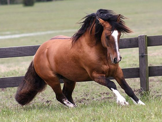 Iron In The Horse's Diet:  Careful Monitoring Is Needed To Maintain Equine Health