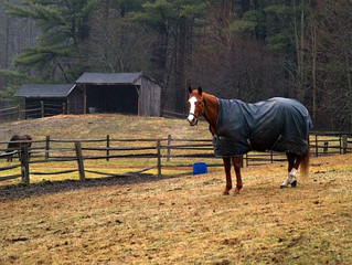Vitamin D:  Does Your Horse Have Enough?