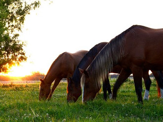 Your Horse's Tipping Point