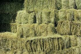 What Do You Feed Your HAY?