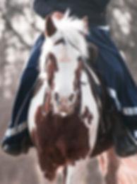 horse-3568011__340 (1).jpg