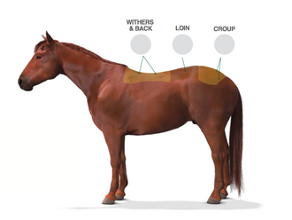 Keeping Your Horse's Topline in Tiptop Condition