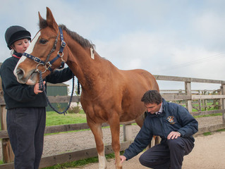 Need Help With Your Horse? When To Turn To The Vet, Farrier, The Nutrition Specialist and Facebook