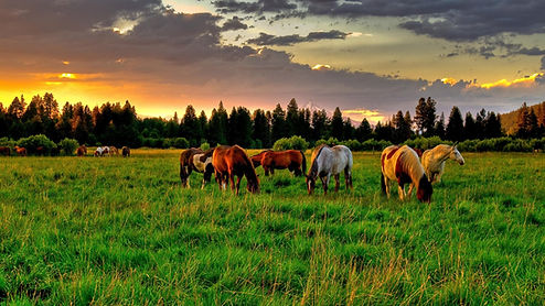 horses-grazing-in-a-beautiful-pasture-22