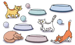 Katzenrätsel