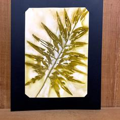Quadro botânico - Folhas - R$20