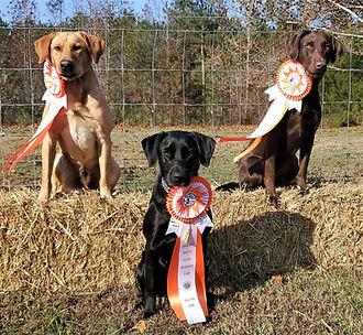 Competition Training Windsor Va