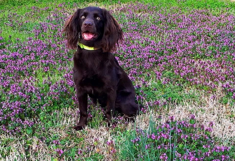 Dog Obedience_ West Wind_Windsor_Sister.jpg