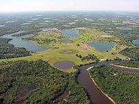 TerraDaily - Brazil Pantanal.jpg