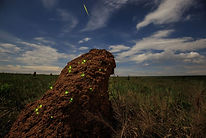 National Geographic - bioluminescence.jp