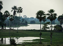 Malay_Mail_-_Brazil's_Pantanal.jpg