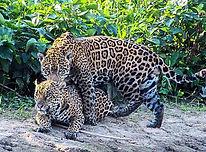 The Star - Pantanal wetlands- A paradise