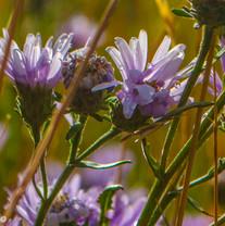 Wild Flowers in the Valles Caldera