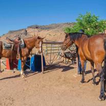 Horses Rehab