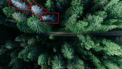 Unsere Wald KI.