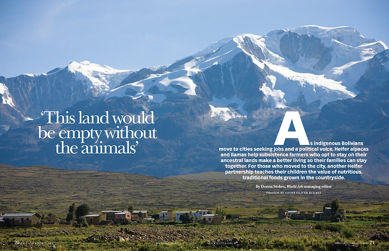 Steven Powell Design. Heifer intro feature spread. Photo edit + design.