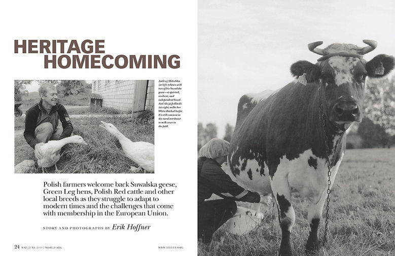 Steven Powell Design. Heifer feature photo edit + design.