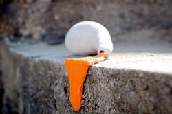 Splurging Orange photo by Anna Moffat