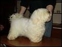 Winsome Doggies Bonita