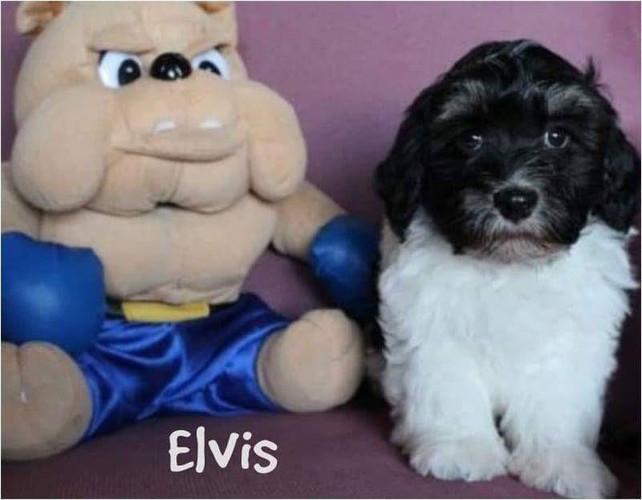 Elvis Lu-La Perla