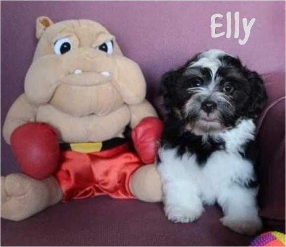 Elly Lu-La Perla