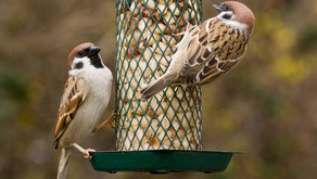 Beyond Bird-Seed: The Meal Backyard Birds Are Craving