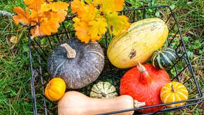 Nutritional Squash Recipes