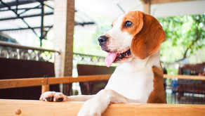 Getting a dog? Consider these factors to make sure you're a match