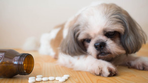 Why Heal Our Pets Naturally?