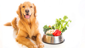 Fruits and Veggies For Dogs