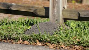 Plants VS Ants – Mysteries of My Backyard Garden