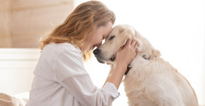 Pet Love Stories