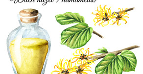 The Magic of Witch Hazel