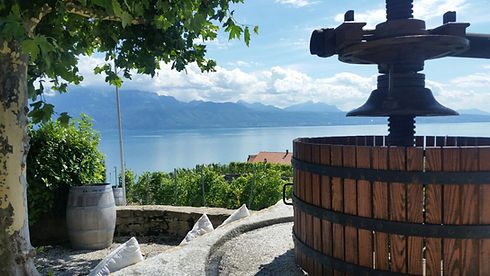 Private wine tour Lavaux