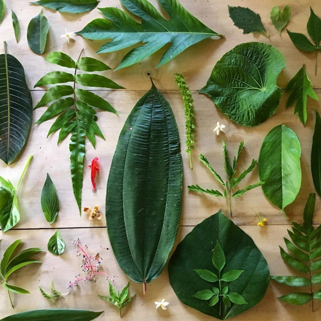 Botanical Leaves Costa Rica