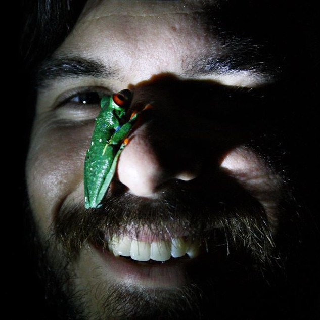 Red Eyed Tree Frog Face