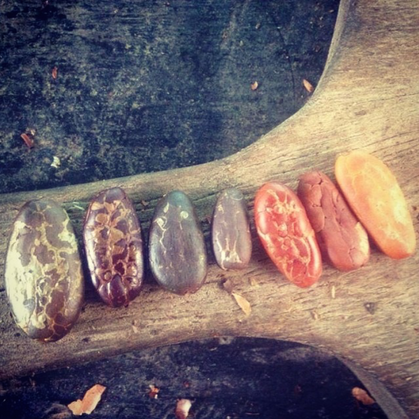 Different Coloured Cacao Beans