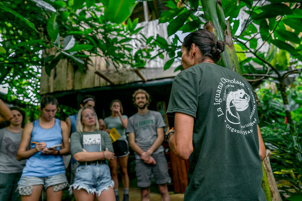 la iguana chocolate tour