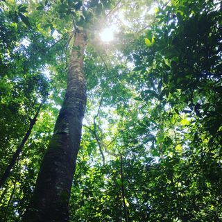 La Cangreja National Park
