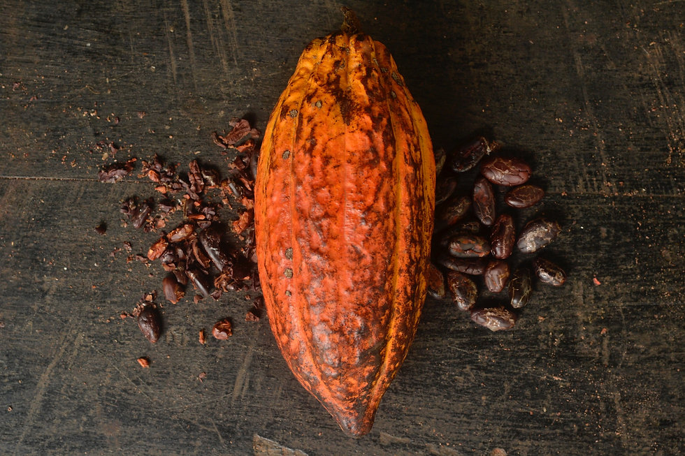 cacao fruit roasted beans