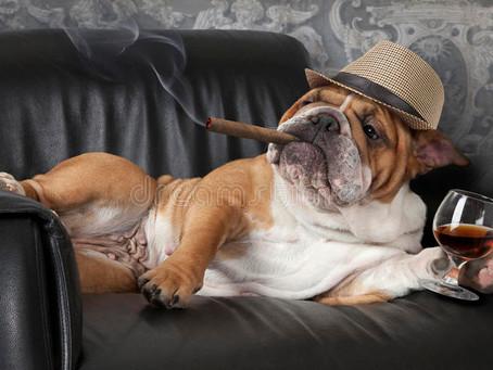 Costos futuros: Siempre hay que tener en cuenta el costo veterinario.