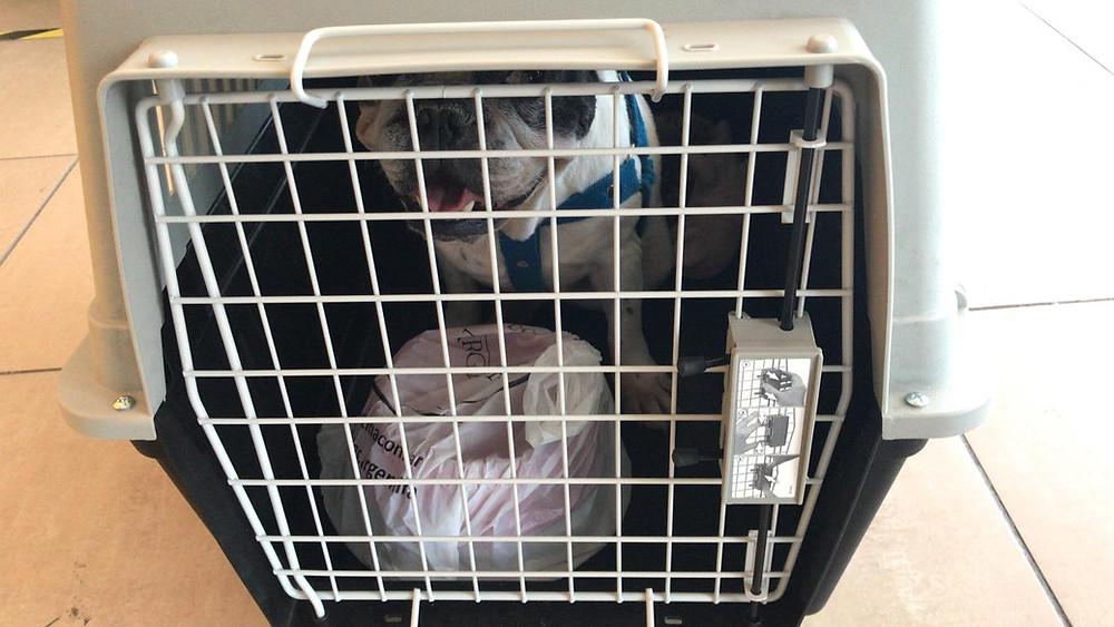 Emigrar a Uruguay: Cómo me llevo a mi mascota?