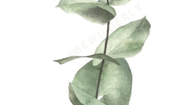 Eucalyptus Watercolour Print