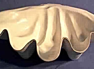 seashell-1[1].jpg