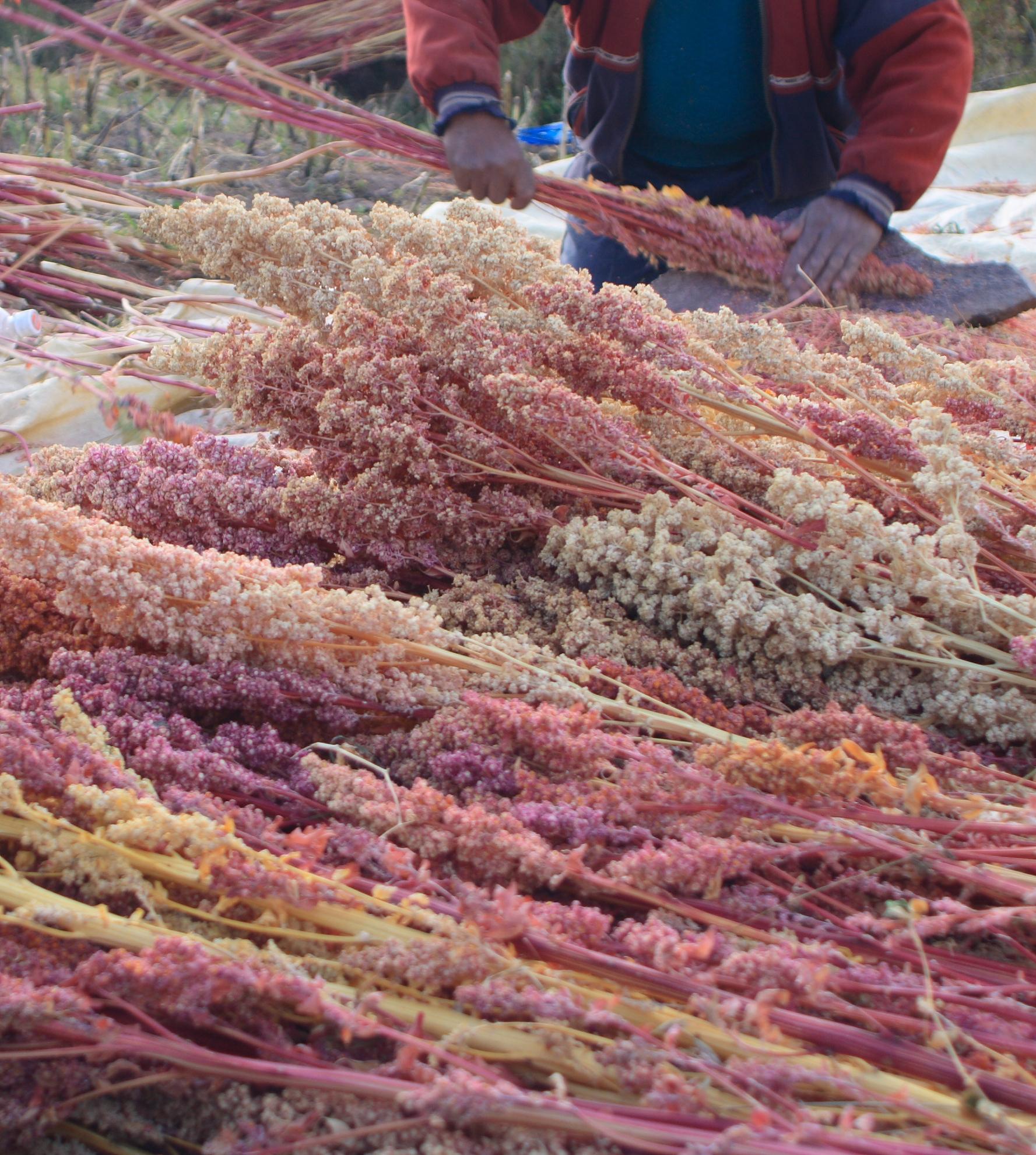 Quinoa Krunch