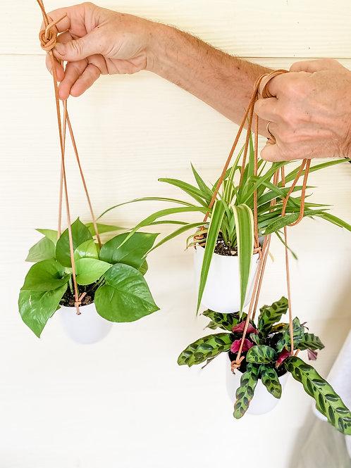 Doni Pot Hanging Plants
