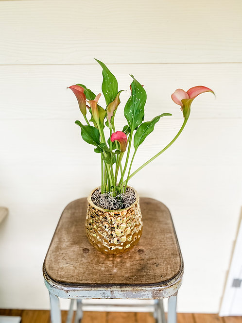 """4"""" Cala Lily in a Gold Jazz Pot"""