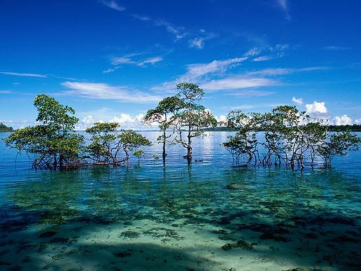 Havelock_Island_Andaman_and_Nicobar_Isla