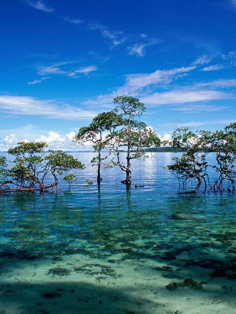 Havelock_Island_Andaman_and_Nicobar_Isla